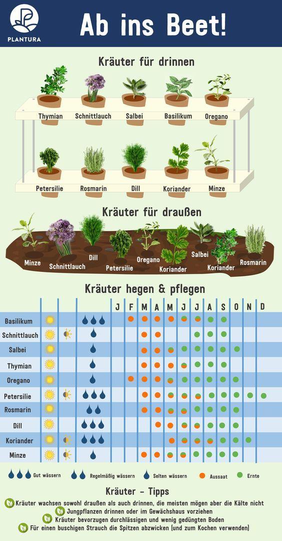 10 Kräuter selbst vermehren und ganzjährig ernten