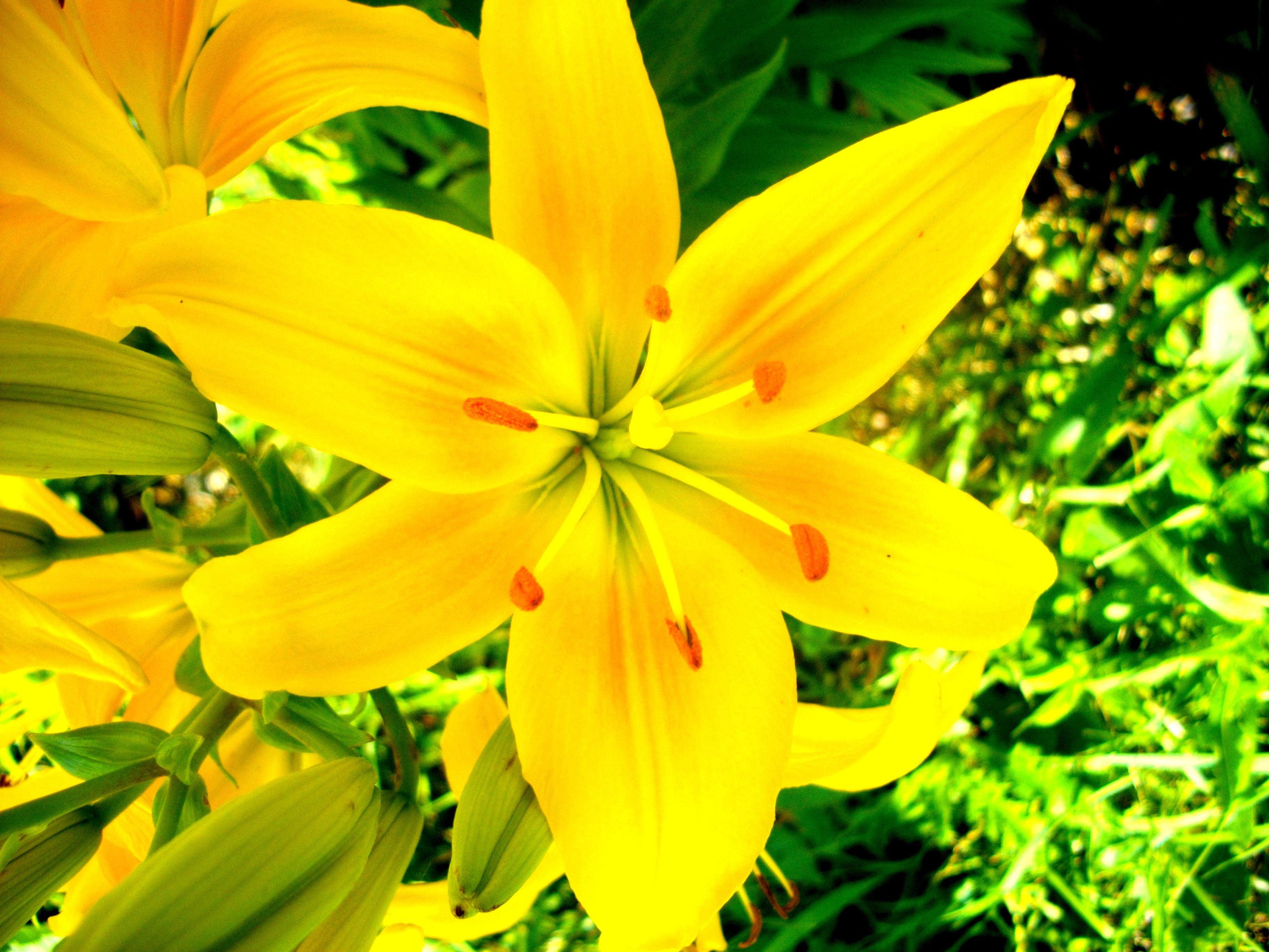 Yellow Yellow Flower They Call Me Mellow Yellow Pinterest