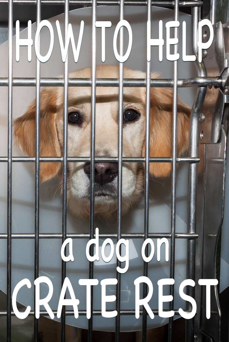 Crate rest for dogs tips and a great book to help you