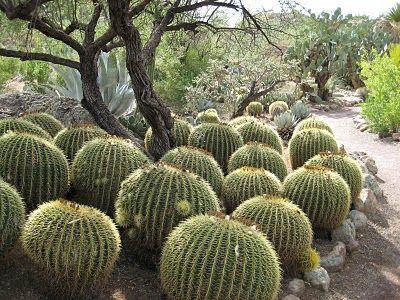 Arboretum, Scottsdale