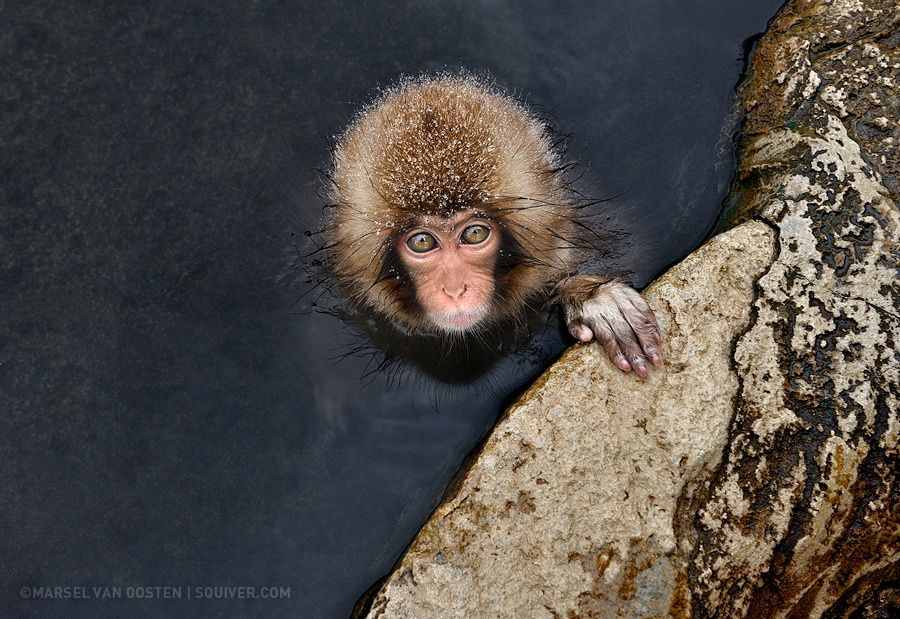 Little Guy by Marsel van Oosten on 500px