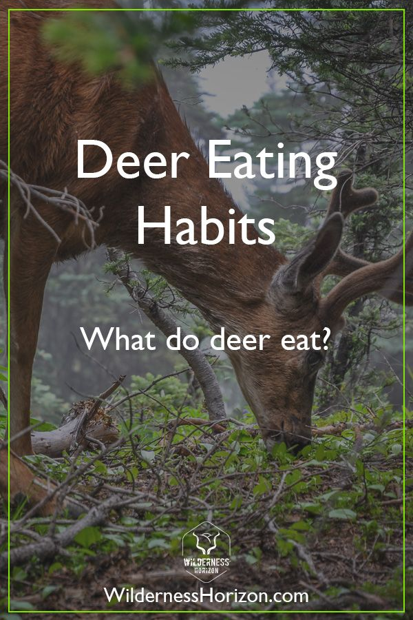 What do Deer Eat in the Wild What do deer eat, Food