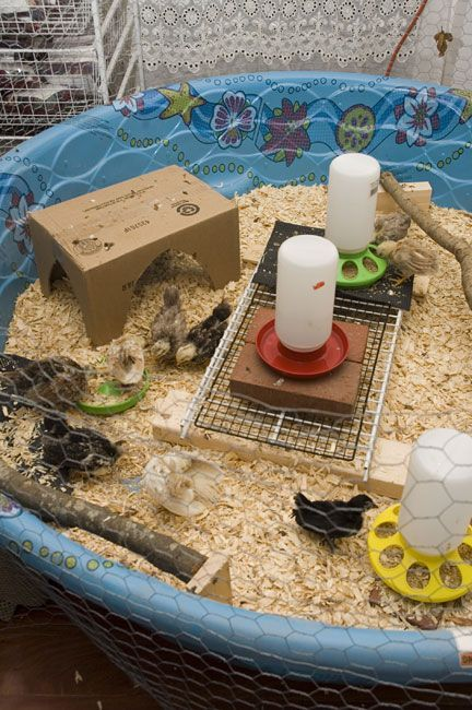Chicken coop brooders look closely see the chick on the for Garten pool coop
