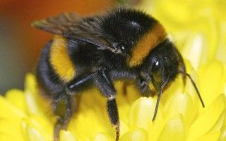 PLEASE SIGN Pic of bumblebee