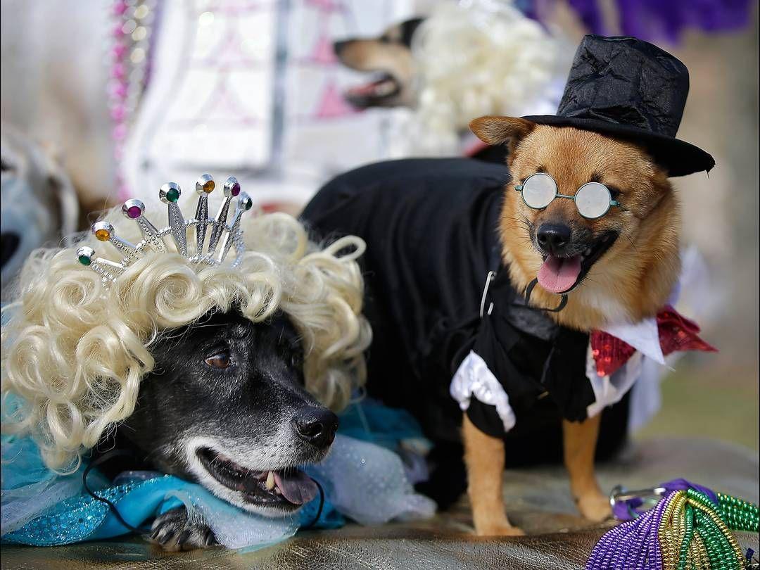 Costumed Dogs Participate In The Mystic Krewe Of Barkus Mardi Gras