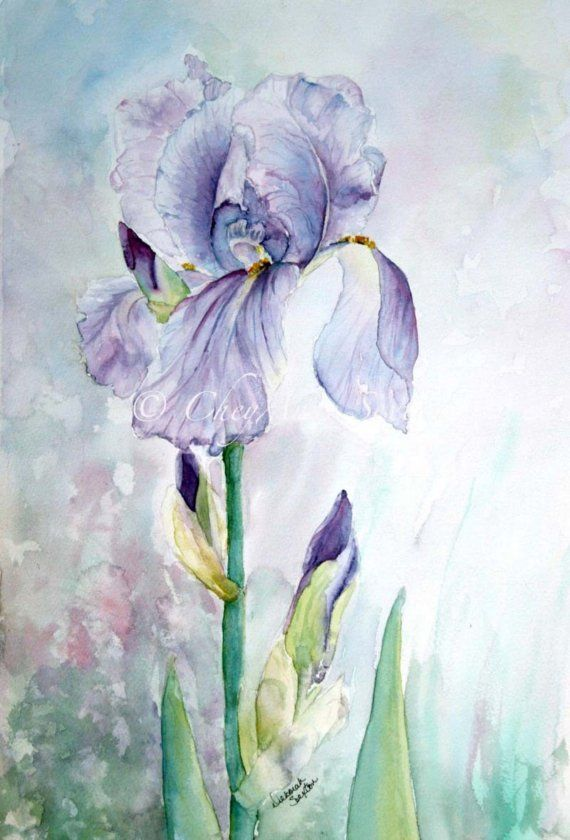 Purple Iris Watercolor Giclee Print Fine Art Home Decor 12x18 In
