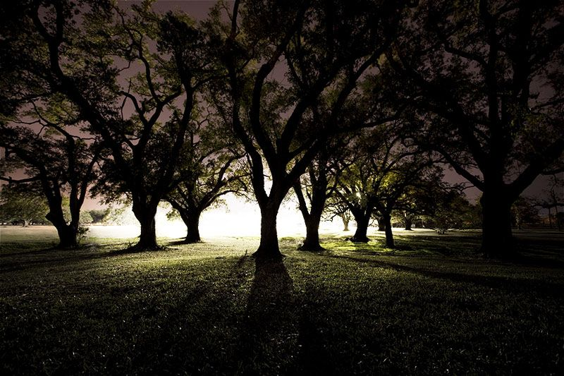 City Park New Orleans City Park New Orleans Night Photography Tree With Images City Park New Orleans Park City Night Photography