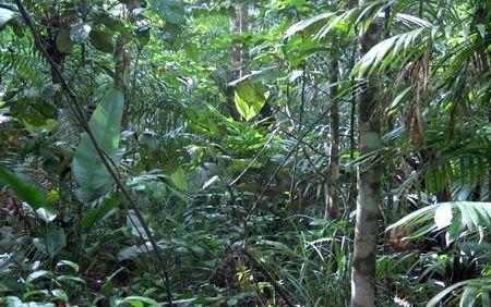 Parque Nacional da Amazônia - Predominância da Floresta Tropical Úmida, com grande diversidade de espécies e formas, sendo que as maiores árvores possuem a altura média de 50 metros; e, devido a luminosidade, os estratos inferiores apresentam grande número de plantas trepadeiras, musgos, líquens, orquídeas, entre outras.