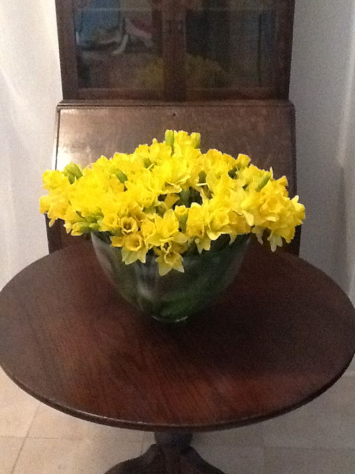 124 daffodils massed in a low bowl. Arranged be me, flowers from my local Jewel Osco supermarket