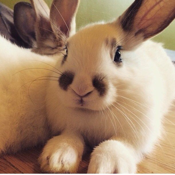 Rabbit Rescue Inc has a nonstop feed of cute bunnies with