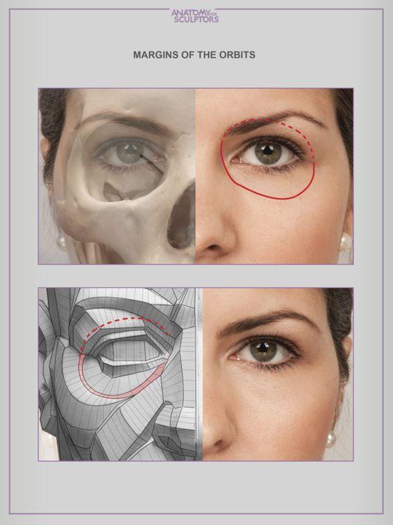8386929g 599800 A R T R E F S Pinterest Anatomy Face
