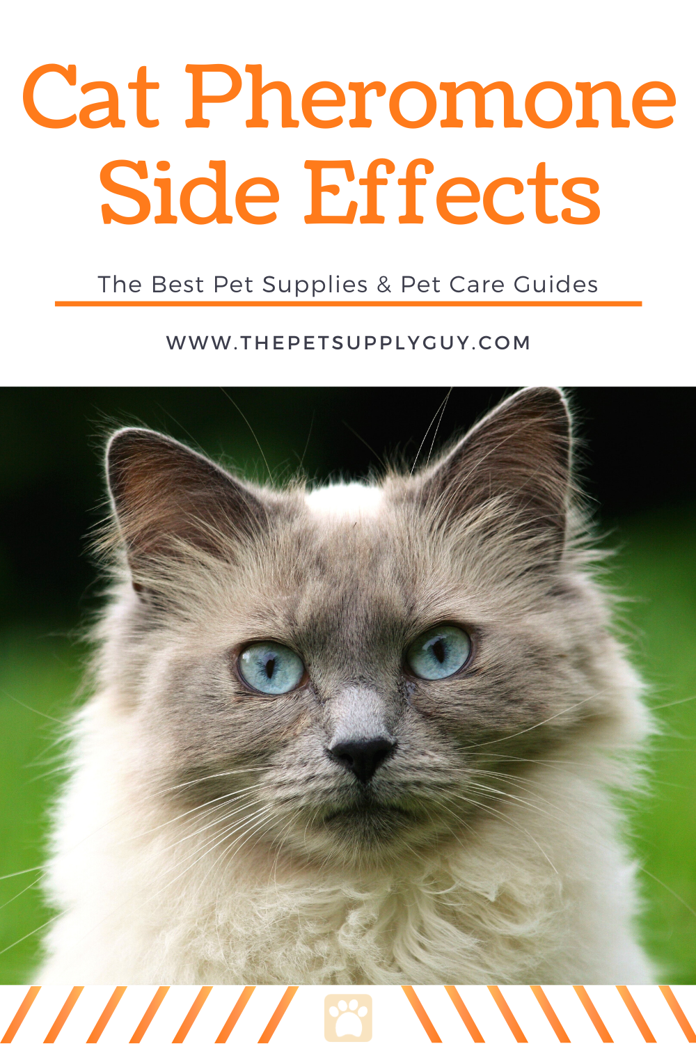 Pheromones For Cats Side Effects The Pet Supply Guy In 2020 Cat Parenting Crazy Cats Cat Care