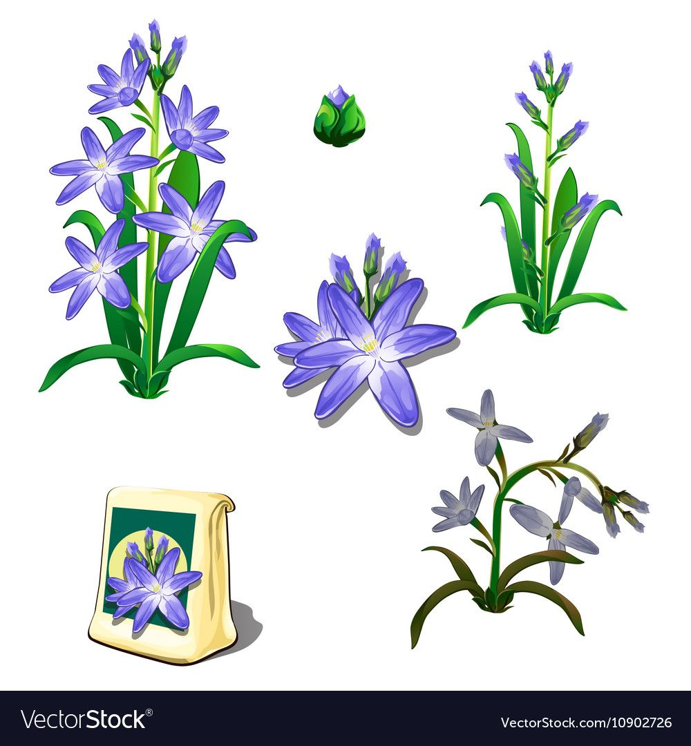 Seeds stages of growth and wilting purple flowers vector