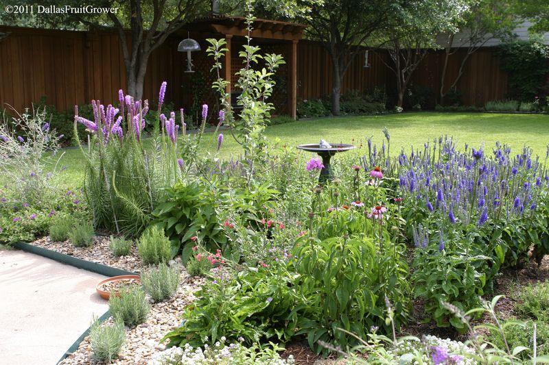 5607 landscape.  Texas native plants/perennials that are drought tolerant: gayfeather (Liatris), mealy blue sage,  rock pendleton,  purple coneflower