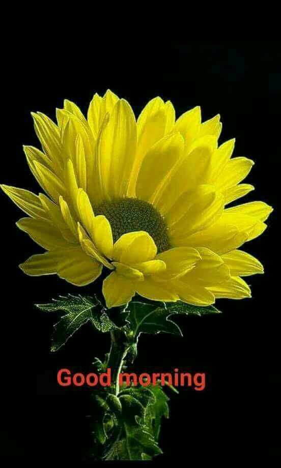 Pin By Ginetta Lavilette On Good Morning Good Morning Flowers Good Morning Picture Good Morning Greetings