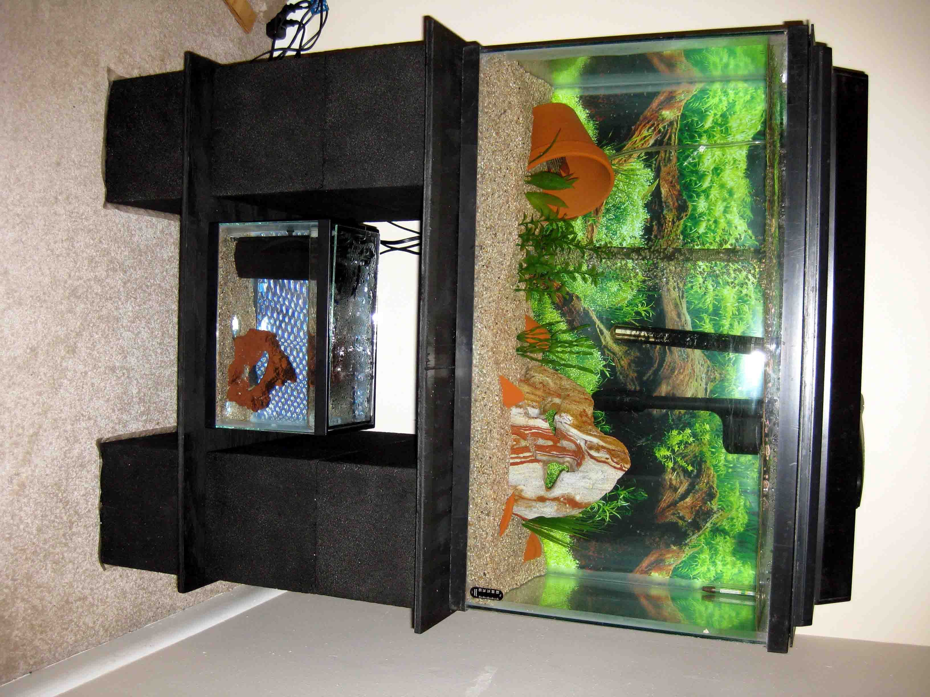 Build A Strong Inexpensive Aquarium Stand Aquarium Stand Diy Aquarium Stand Aquarium