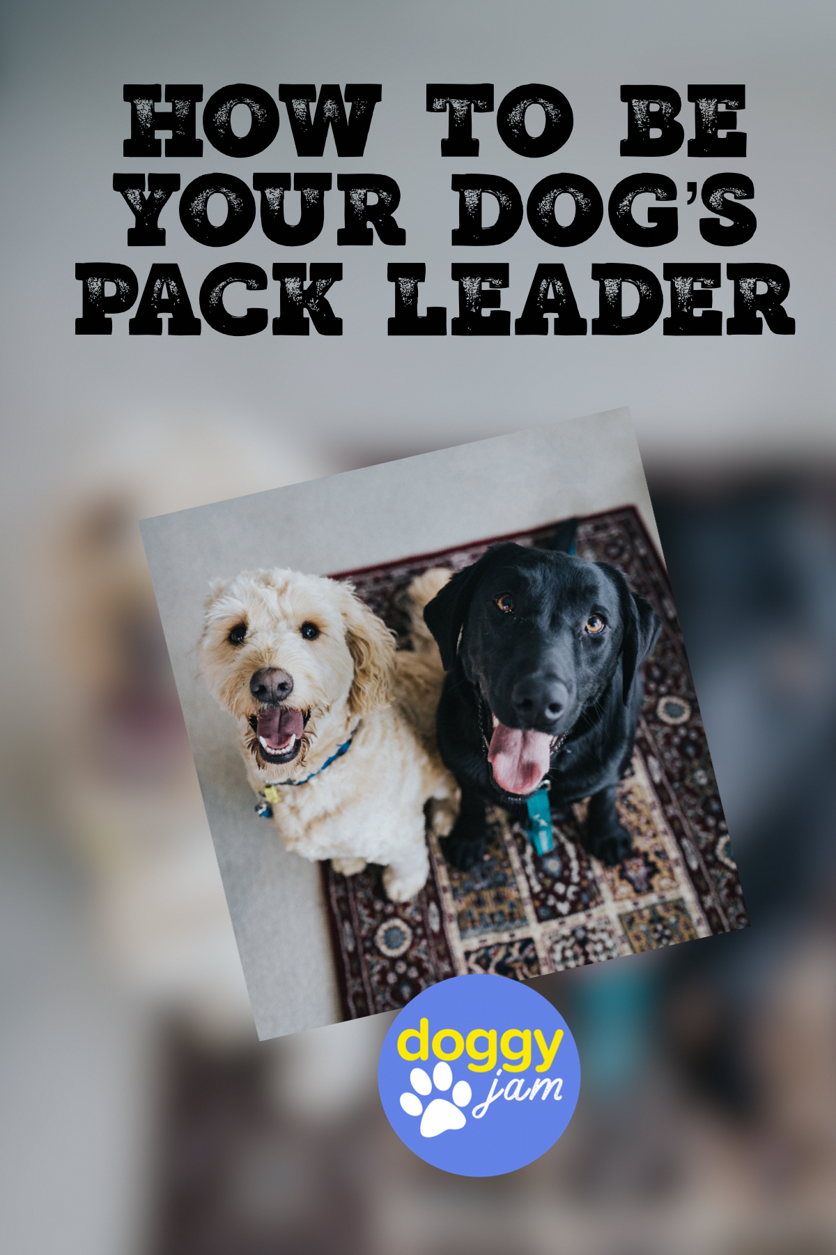 3 Simple Dog Training Tips That Will Change Your Dogs In No Time Dog Pack Leader Dog Training Obedience Training Your Dog