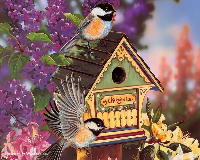 Красивые открытки мультяшные с птичками фото