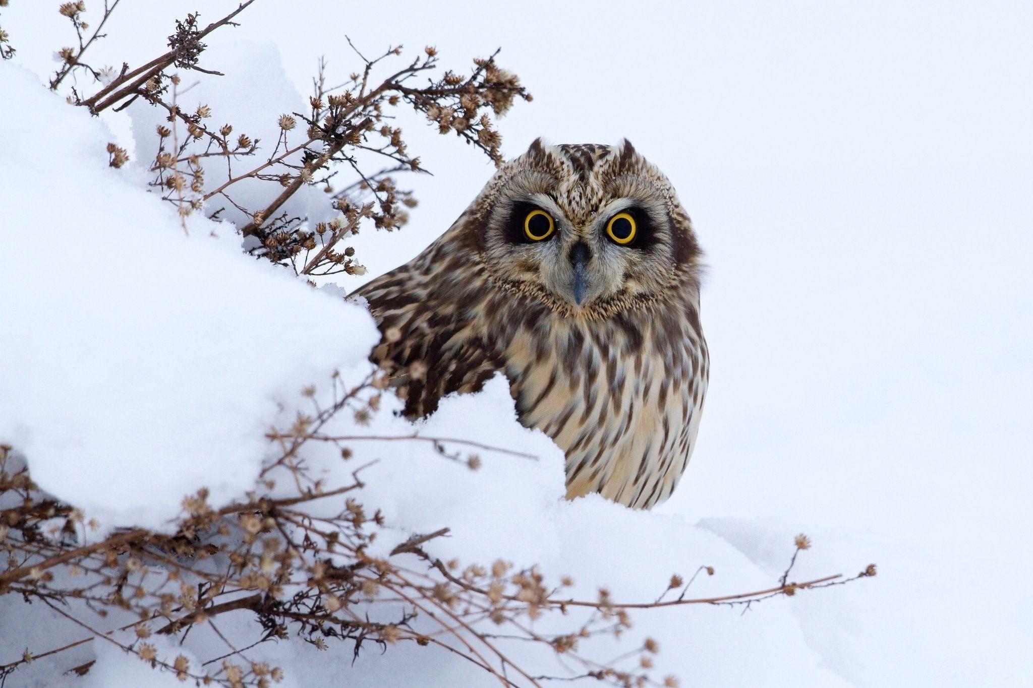 нас картинки совы зимой в лесу проснулся, сразу схватил