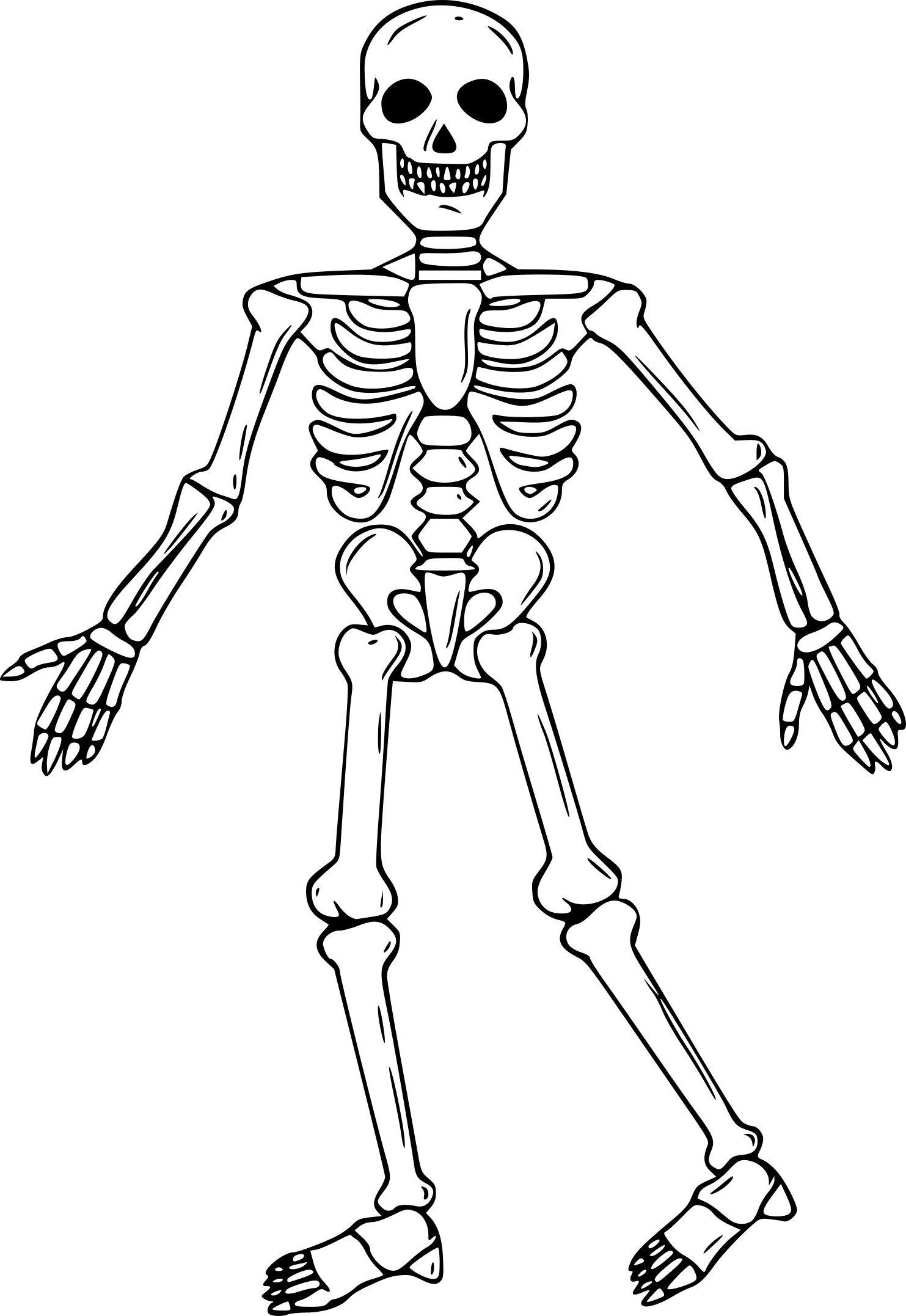 12 Nouveau De Coloriage Squelette Image Coloriage Squelette Image Coloriage Coloriage Halloween