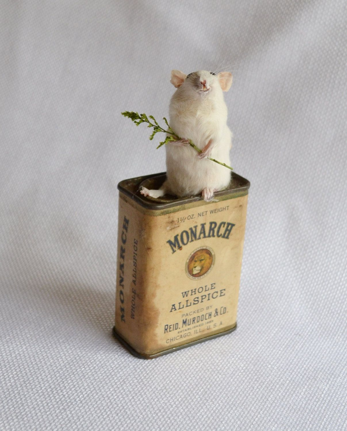 Taxidermy Mouse. $40.00, via Etsy.