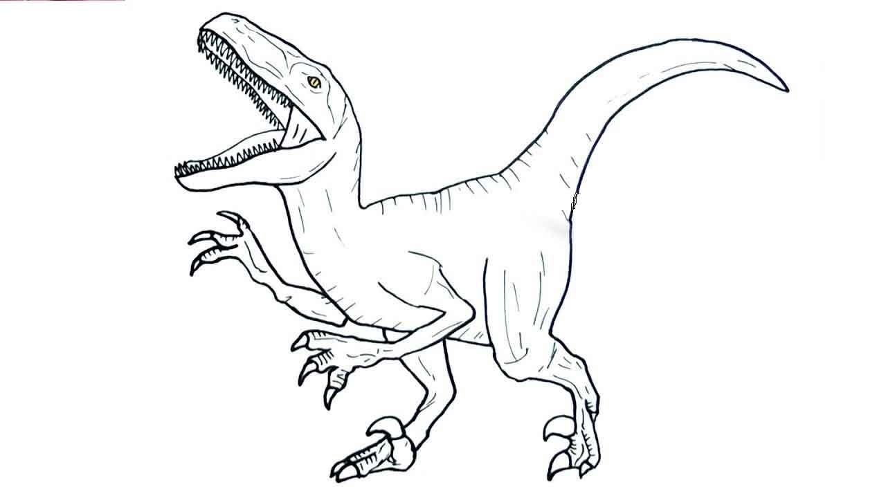 10 Coloring Page Velociraptor Velociraptor Drawing Coloring Pages Blue Jurassic World