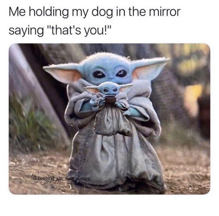 Women S Graphic Tees In 2020 Yoda Meme Yoda Funny Harry Styles Baby