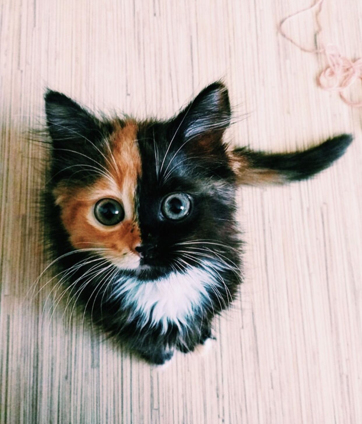 C H Y N A Cute Baby Animals Cats Kittens Cute Animals