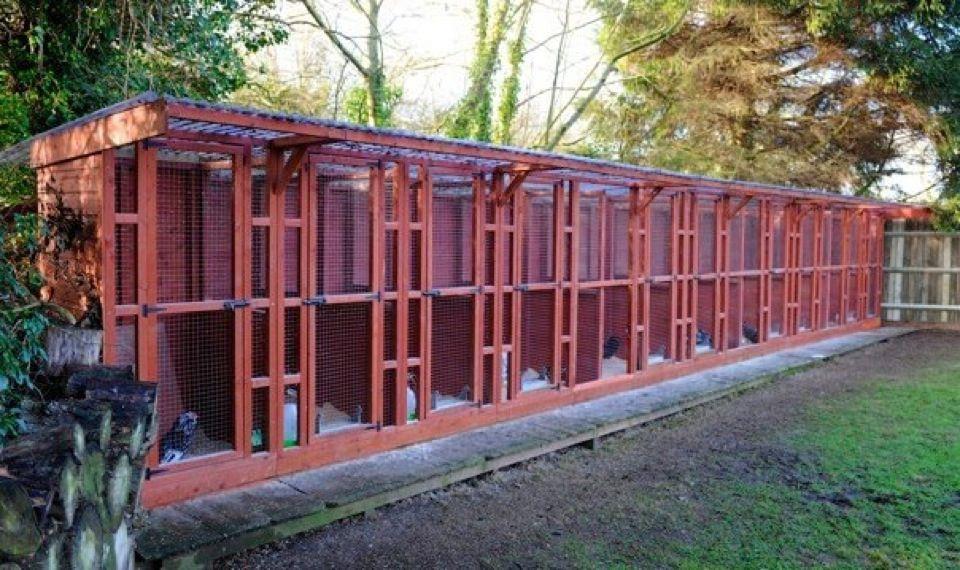breeding pens | Raising poultry | Chicken barn, Chickens backyard
