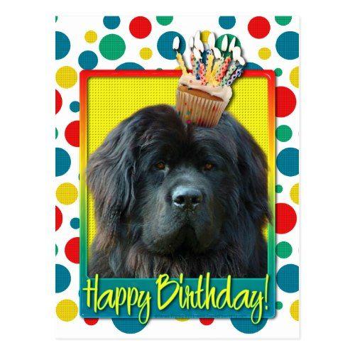 Birthday Cupcake - Newfoundland Postcard   Zazzle.com ...
