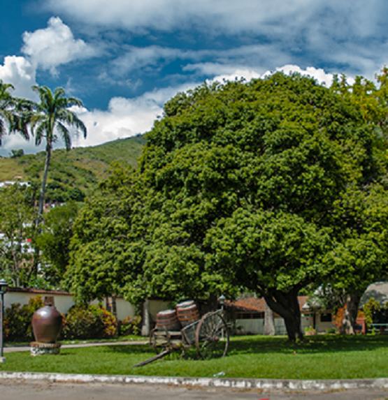 Al entrar a nuestra Hacienda te sentirás conectado con la energía que emana la naturaleza. Ron Santa Teresa. El Consejo, Aragua, Venezuela