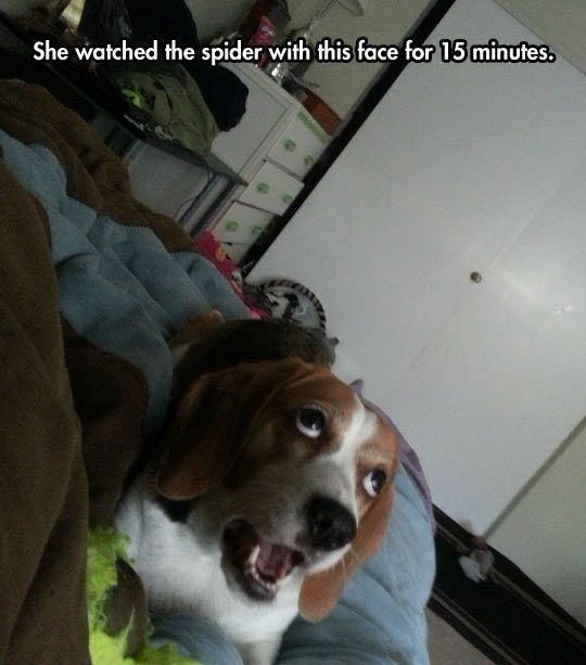 Completely Amazed By a Spider  // funny pictures - funny photos - funny images - funny pics - funny quotes - #lol #humor #funnypictures