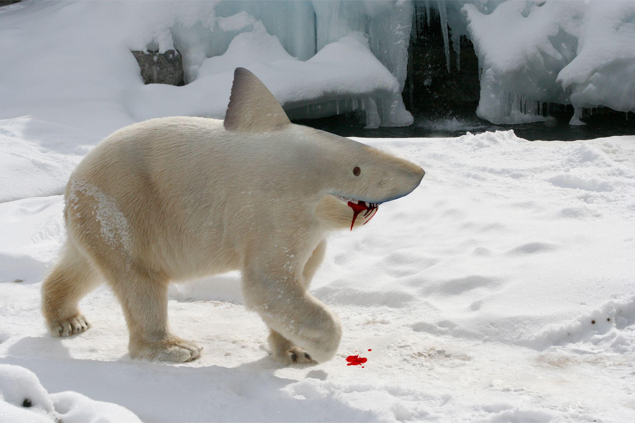 A baby bear-shark? #GraphicDesign #Photoshop | G R A P H I ...