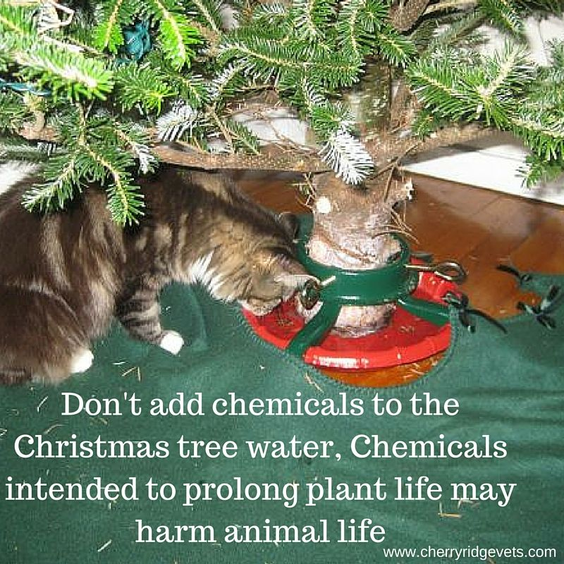 Pin by Cherry Ridge Veterinary Clinic on Christmas Safety