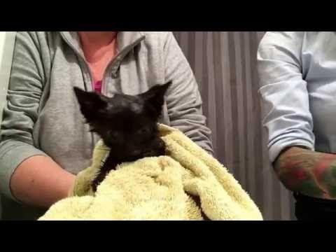 Treating Fleas On Kitten Dawn Dish Soap Bath Make Soapy Ring At Neck First Kitten Lady Fleas On Kittens Flea Bath For Cats Kittens