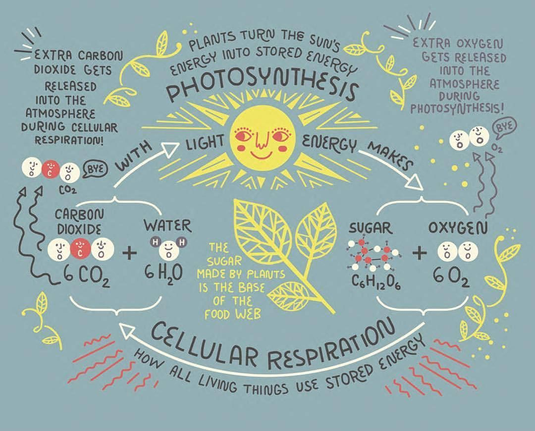 Pin By Candy Latte On Anatomy And Science