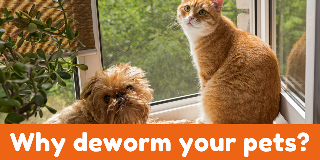 Vet Talk The Importance of Deworming Your Pets Your pet