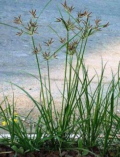 Sabun Pond S Untuk Membersihkan Jerawat Untul Laki Laki
