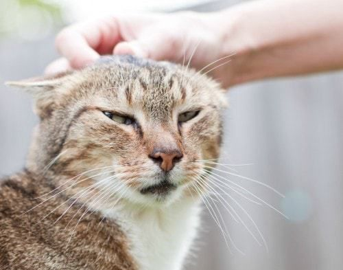 Petting Aggression In Cats Biting The Hand They Love Cat Biting