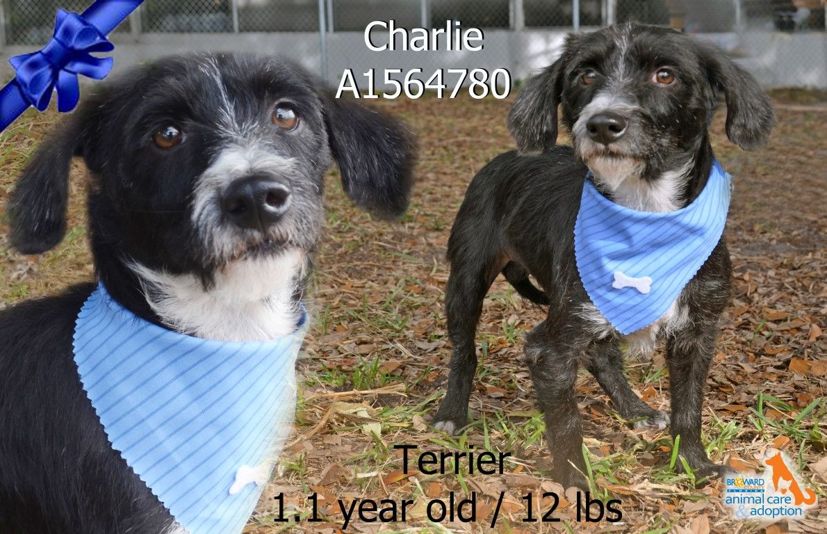 Hi, my name is Charlie and I'm available for adoption at