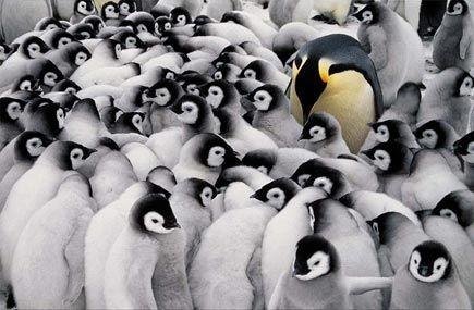 Los Fotógrafos de National Geographic: Frans Lanting - Backfocus