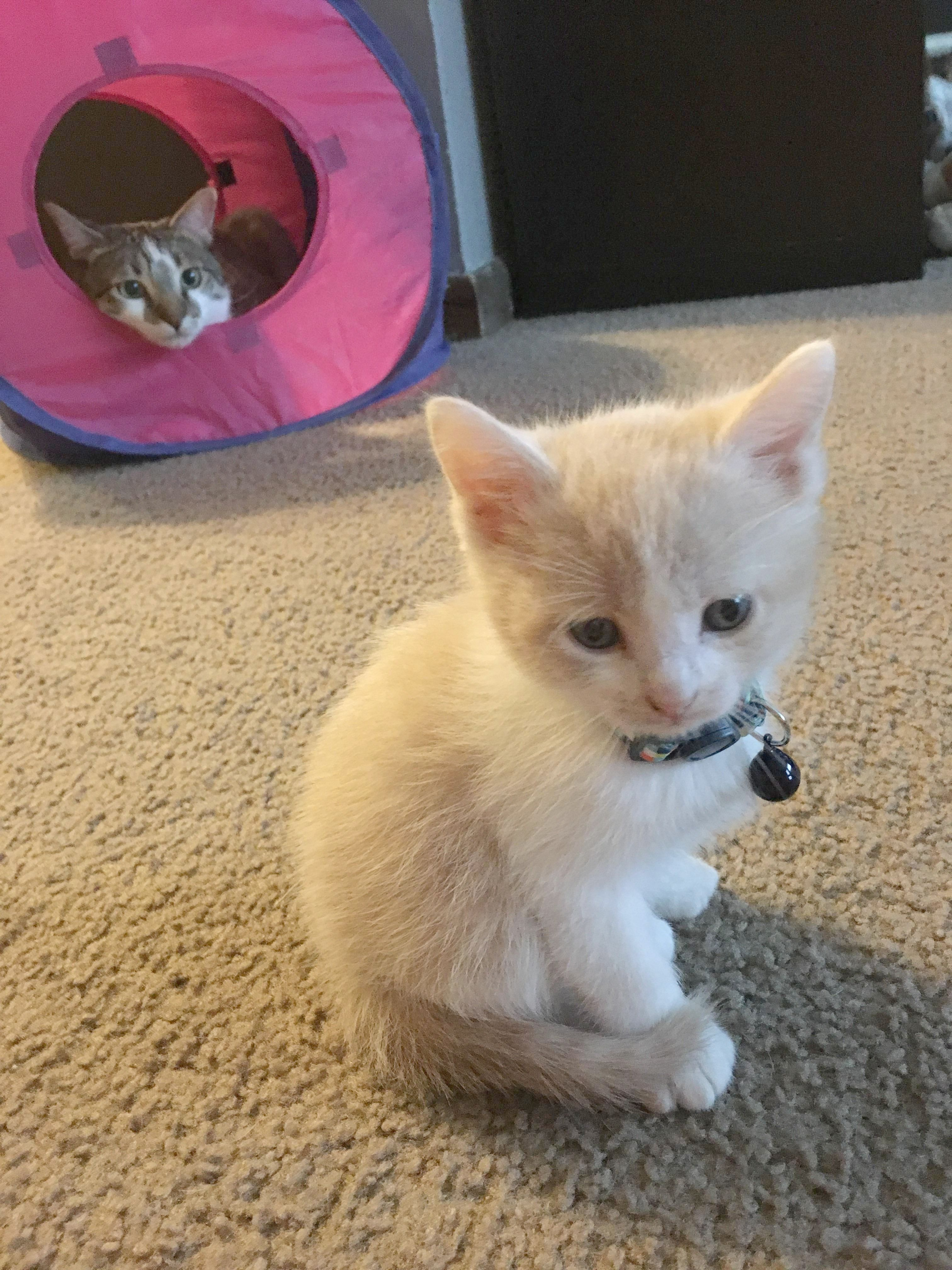 Awesome Kittens For Sale In Ct Cool Kittens Cutest Baby Cats Cute Cats