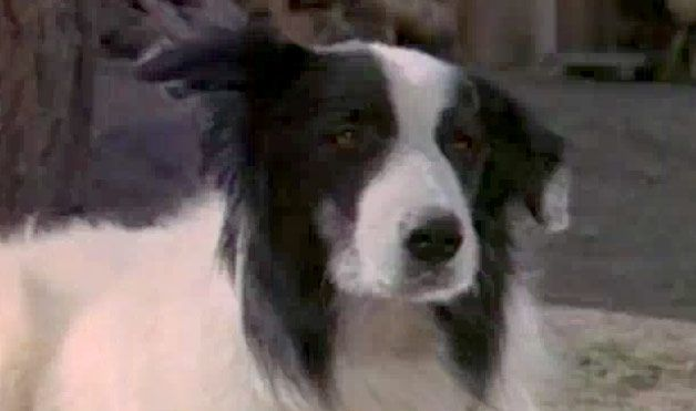 Bandit Was Laura Ingalls Second Dog Originally He Was A Stray