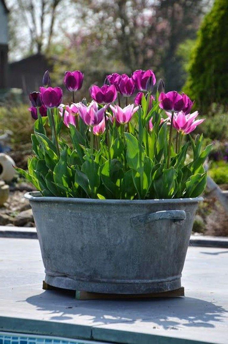 Garden Plant Arrangement