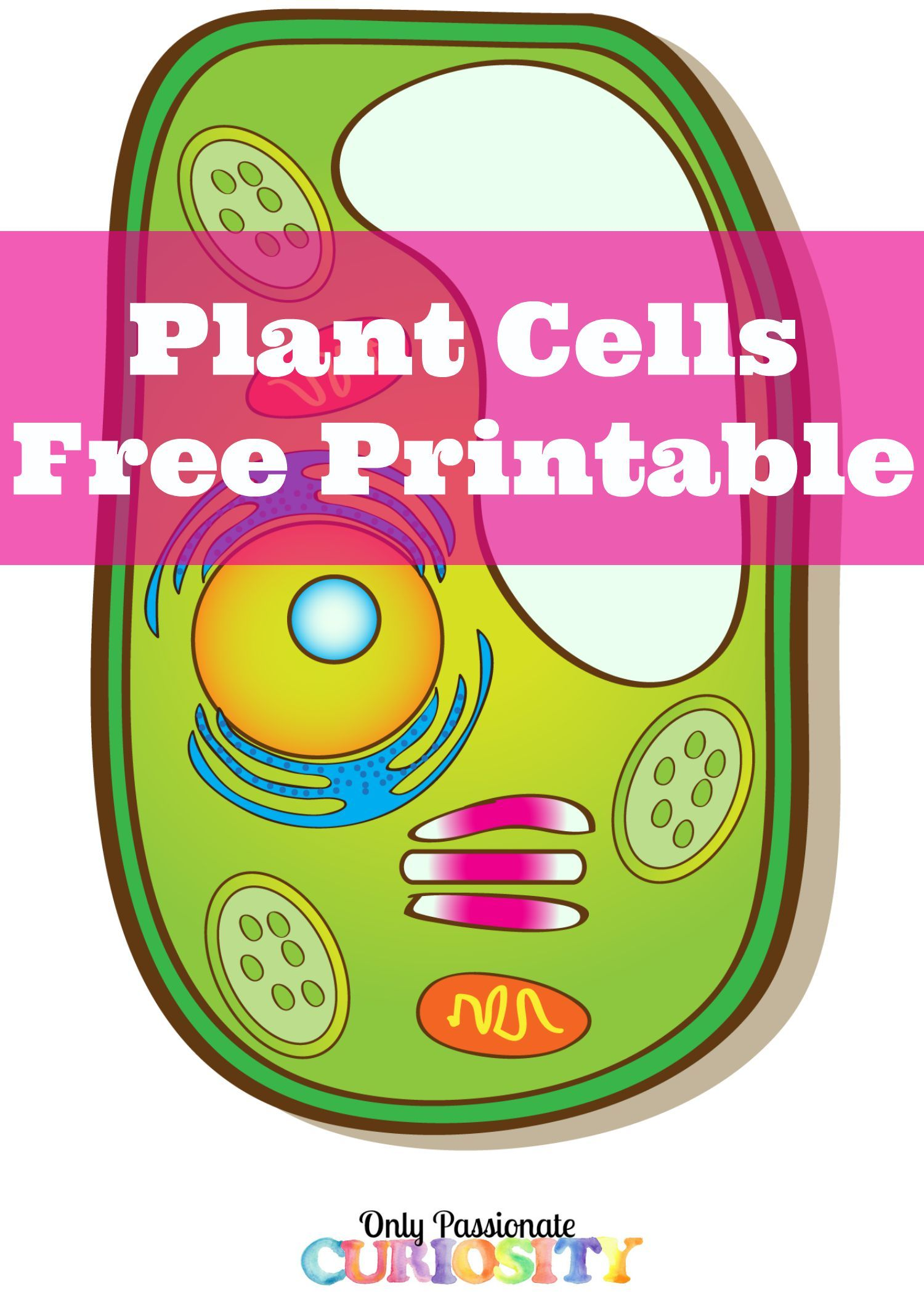 Plant Cells Printable Pack | Coloring, All. and Plants