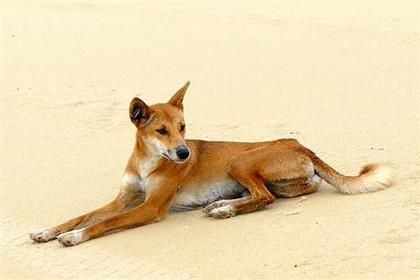 Pet Food Products Supplies At Low Prices Free Shipping Chewy Com Australia Animals Dingo Animals