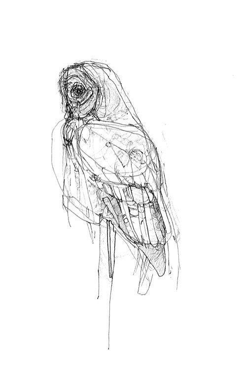 Line Drawing Prints : Leavetaking owl drawing print by emilyleonard on etsy
