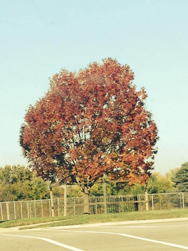 Fall. I love it!!