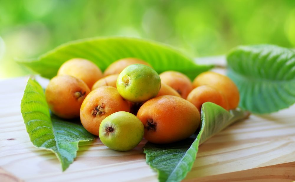 Loquats are neutral, sweet and sour. Loquats lubricate dryness, stop coughs, harmonize the stomach, and calm the liver. For nausea and vomiting, boil a tea using loquats. For a cough, eat fresh loquats to relieve. Reference: The Tao of nutrition, Maoshing Ni - Cathy McNease - Sevenstar, Communications - 1987
