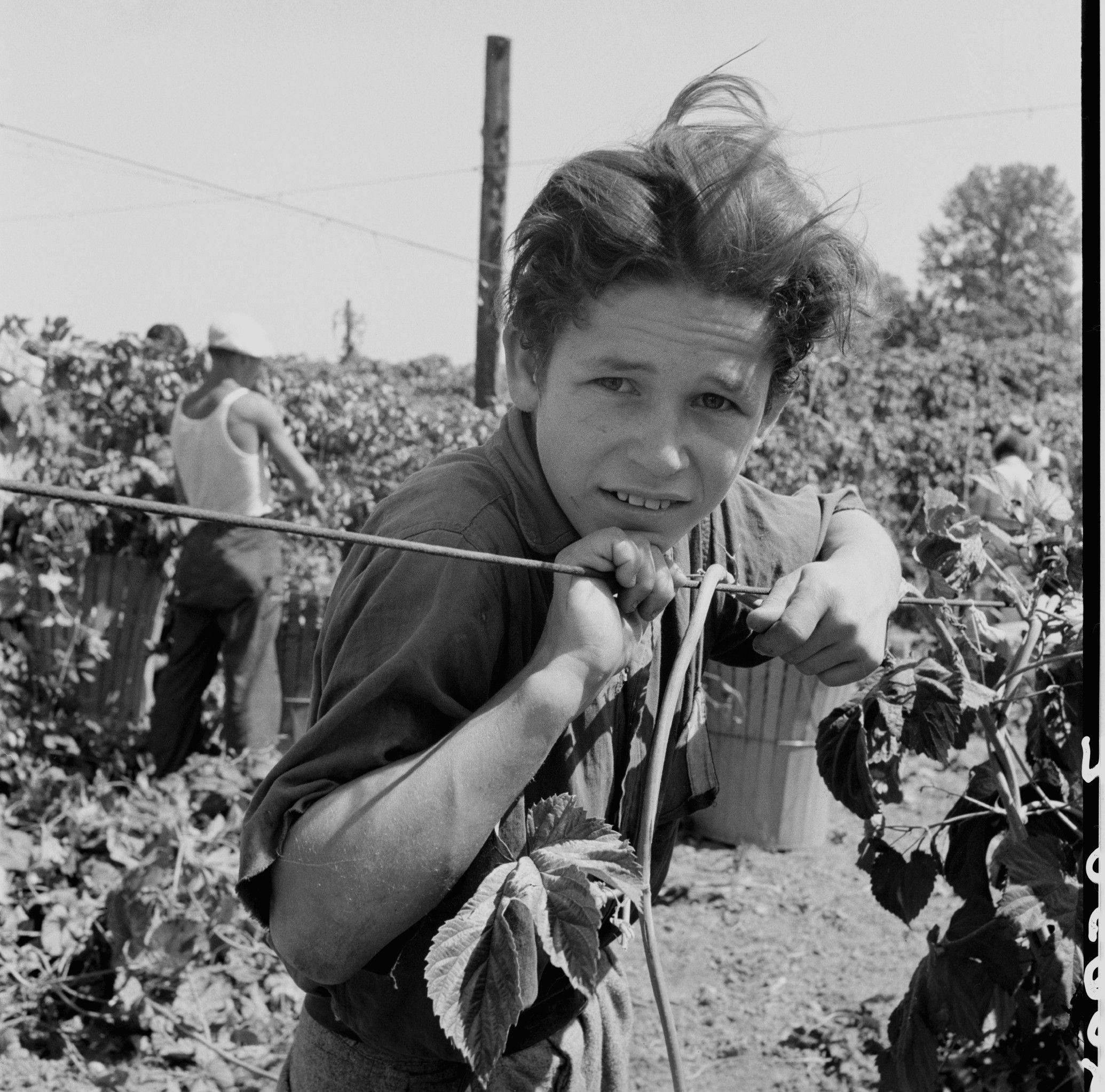 Boy Picking Crops - Δ Dorothea Lange